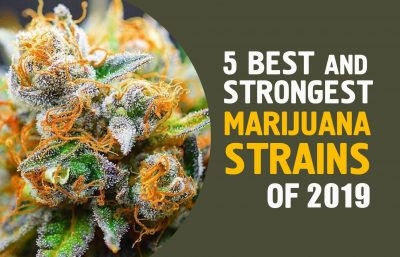 Top 5 Marijuana Strains of 2019